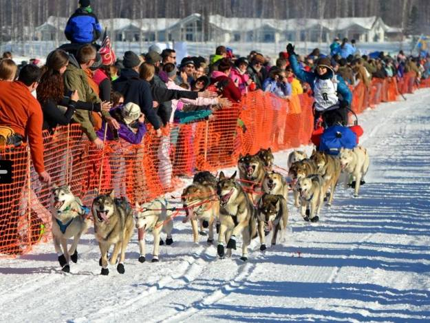 Our team at the 2014 Iditarod start. Picture taken by Anki Ødegaard/Sjekkpunktet.no