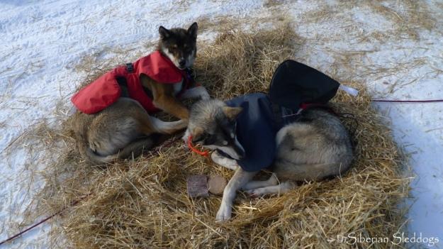 Kost and Mira resting in Nikolai