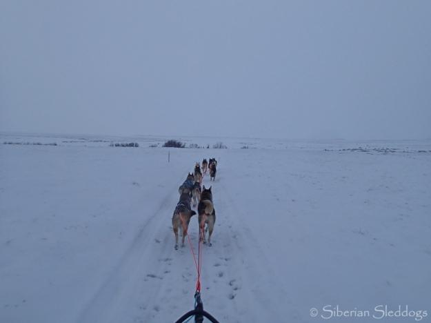 Icy running towards Unalakleet