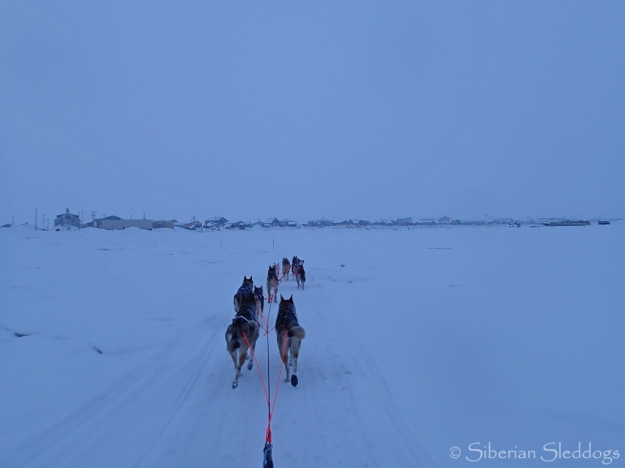 Arriving at checkpoint Unalakleet on the Bering sea coas!