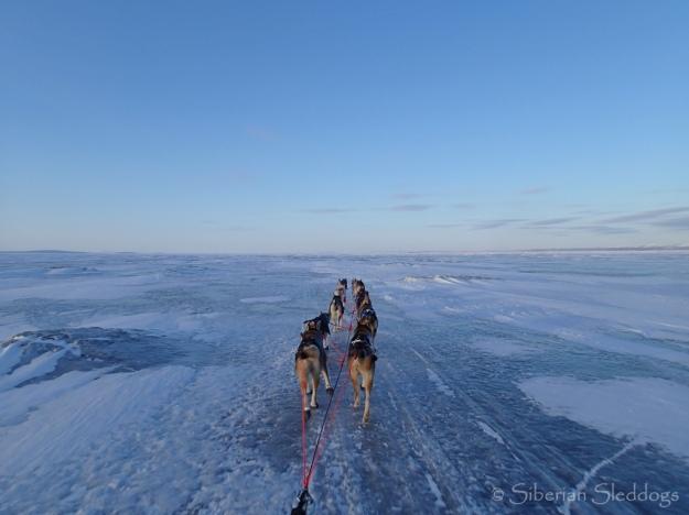 Evening mood on the ice on Norton Sound