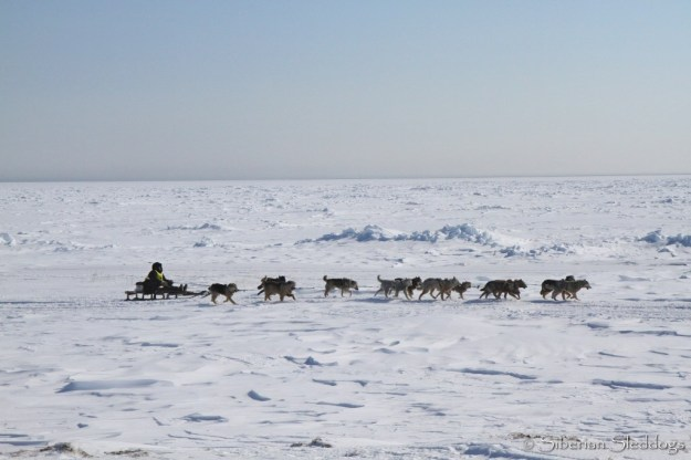 A chukchi team running along the coast on their way to Yanrakynnot