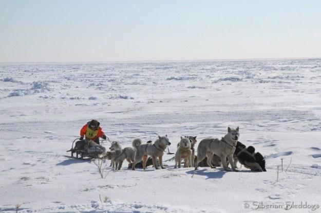 A Chukchi team taking a short break on their way to Yanrakynnot