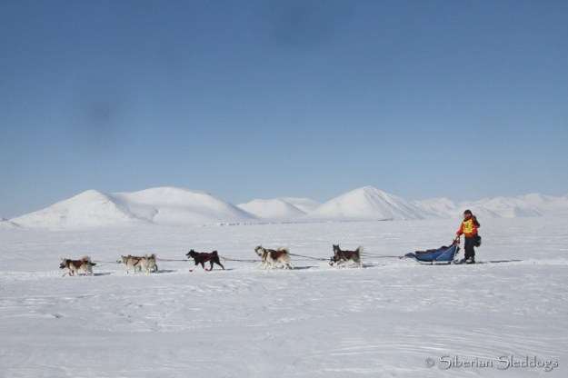 Miriam and her team of polar huskies