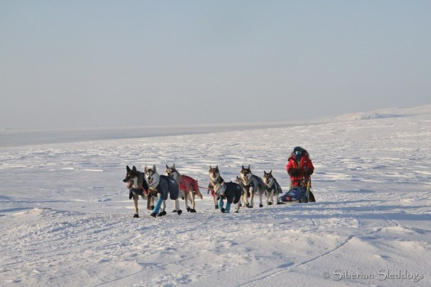 Our team in the tundra on our way towards Lavrentiya