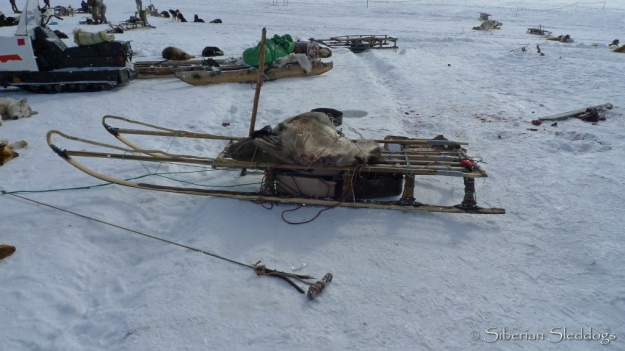Traditional Kolyma-style sit down sled