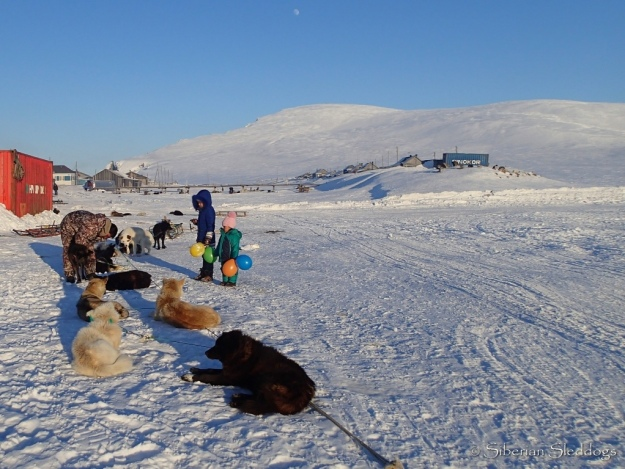 Local kids watching a musher taking care of his dogteam in Inchoun