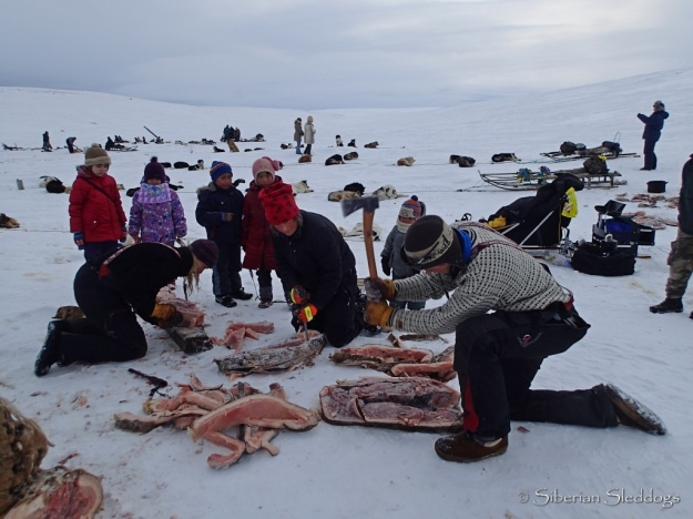 Mille, Miriam and Joar all busy chopping cutting and dicing walrus, closely watched by local kids